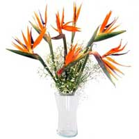 Bird of Paradise with Vase