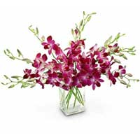 Luminous 10 Orchids with Vase